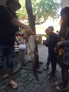vissen Minh